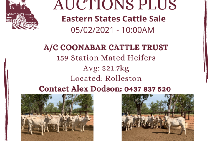 AUCTIONS PLUS - COONABAR (1)