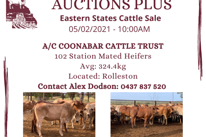 Copy of AUCTIONS PLUS - COONABAR - 46 hfr (1)